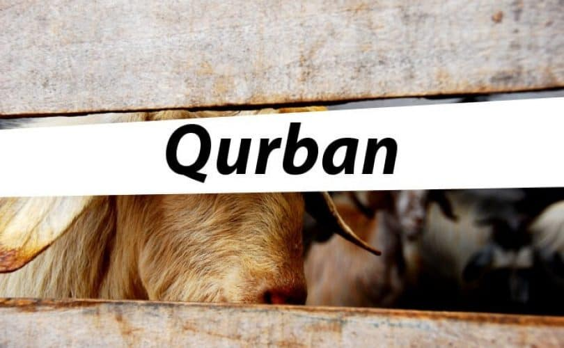 Kumpulan Artikel Idul Adha Dan Qurban Di Muslimah.Or.Id
