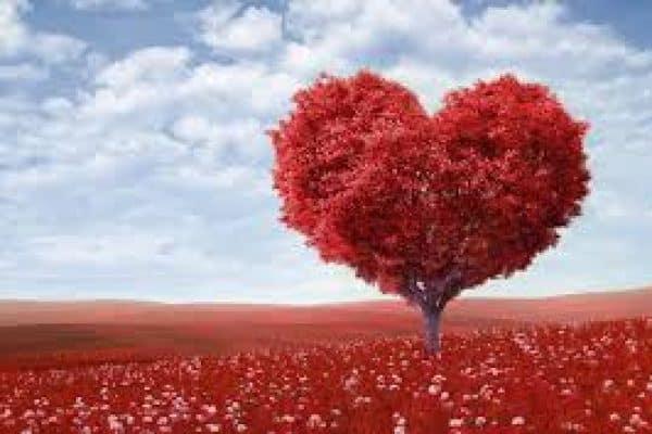 Bila Hati Jatuh Cinta
